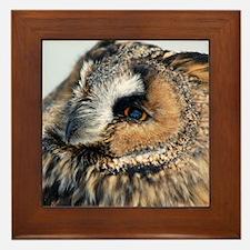 Eagle Owl Framed Tile