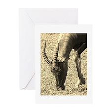 sepia topi grazing Greeting Card