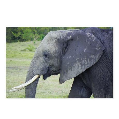 juvenile mara elephant kenya collection Postcards
