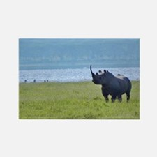 nakuru black rhino kenya collection Rectangle Magn