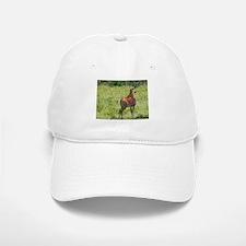 impala buck with oxpeckers kenya collection Baseball Baseball Cap