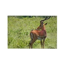 impala buck with oxpeckers kenya collection Rectan