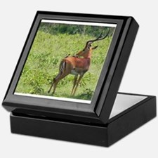 impala buck with oxpeckers kenya collection Keepsa