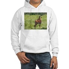 impala buck with oxpeckers kenya collection Hoodie