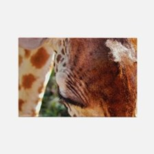 rothschild giraffe closeup kenya collection Rectan