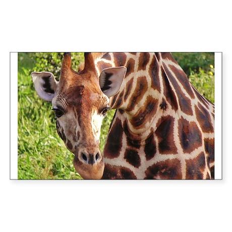 rothschild giraffe looking kenya collection Sticke