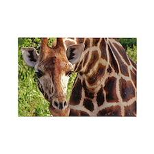 rothschild giraffe looking kenya collection Rectan