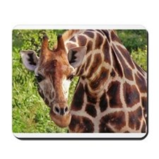 rothschild giraffe looking kenya collection Mousep