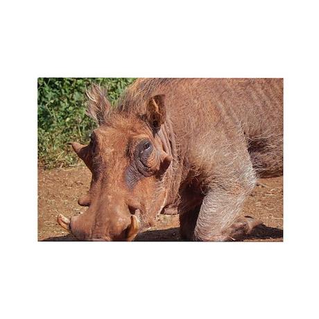 warthog in nairobi kenya collection Rectangle Magn