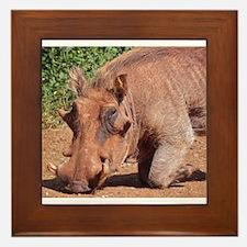 warthog in nairobi kenya collection Framed Tile