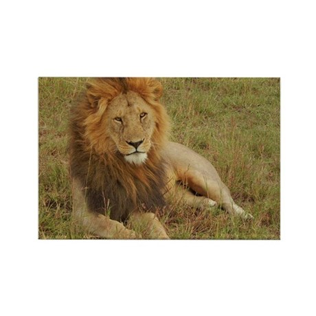 male lion kenya collection Rectangle Magnet