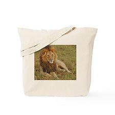 male lion kenya collection Tote Bag