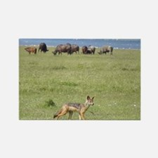 silverbacked jackal nakuru kenya collection Rectan