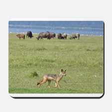 silverbacked jackal nakuru kenya collection Mousep