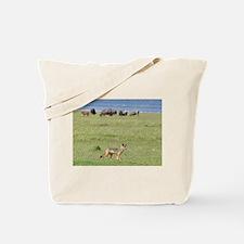 silverbacked jackal nakuru kenya collection Tote B