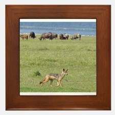 silverbacked jackal nakuru kenya collection Framed