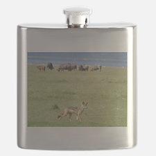 silverbacked jackal nakuru kenya collection Flask