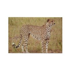 cheetah brother kenya collection Rectangle Magnet
