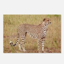 cheetah brother kenya collection Postcards (Packag