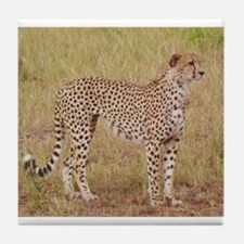 cheetah brother kenya collection Tile Coaster