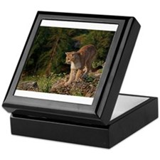 Cougar 1 Keepsake Box