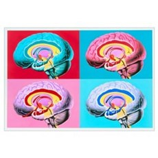 Artworks showing the limbic system of the brain Poster