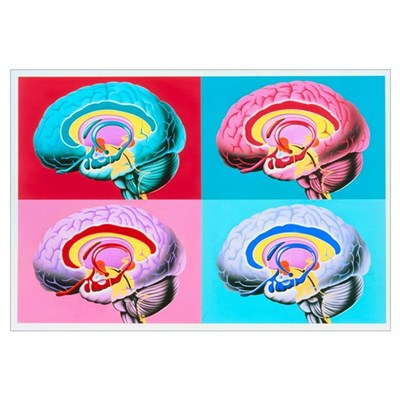 Artworks showing the limbic system of the brain Framed Print