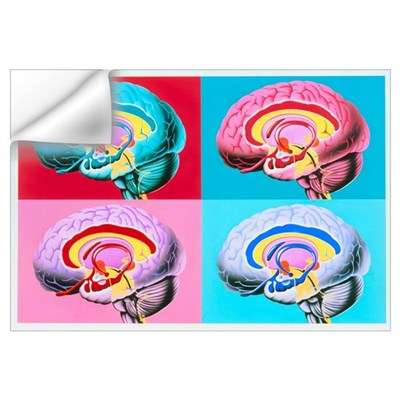 Artworks showing the limbic system of the brain Wall Decal