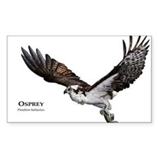 Osprey Decal