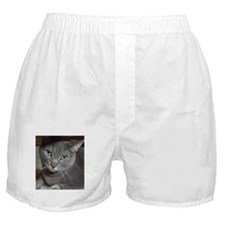 Russian Blue Gray Cat Boxer Shorts