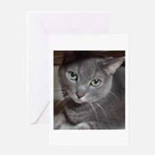 Gray Cat Russian Blue Greeting Card