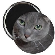 Gray Cat Russian Blue Magnet