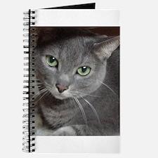 Gray Cat Russian Blue Journal