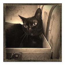"Box Cat, sepia 1 Square Car Magnet 3"" x 3"""