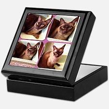 Champagne Burmese Box Cat x4 Keepsake Box