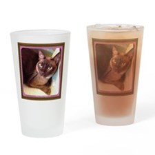Champagne Burmese Box Cat Drinking Glass