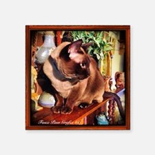 """Tonkinese on Mantle Square Sticker 3"""" x 3"""""""