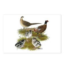 Pheasant Family Postcards (Package of 8)