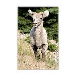 Lamb Mini Poster Print