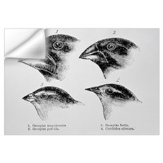 Diagram of beaks of Galapagos finches by Darwin Wall Decal