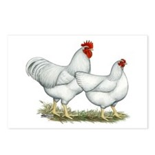 White Rock Chickens Postcards (Package of 8)