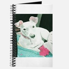 Jack Russell Terrier Sully Journal