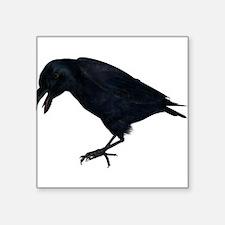 "black crow Square Sticker 3"" x 3"""