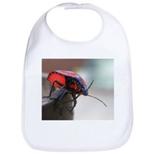 Hibiscus Harlequin Bug (Tectocoris diophthalmus) B