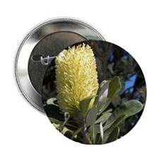 "Australian Wildflowers - banksia 2.25"" Button"