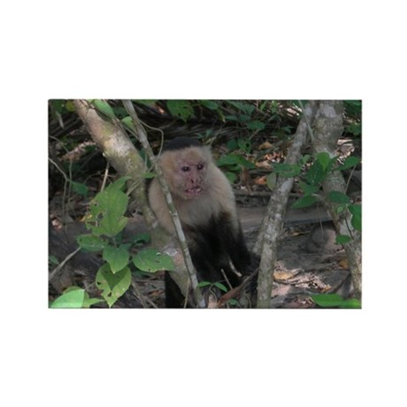 White-faced Capuchin Monkey Rectangle Magnet