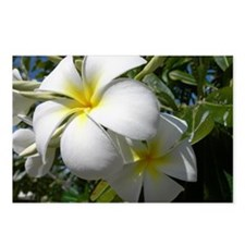 Tiare Flowers Postcards (Package of 8)