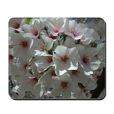 Cherry Blossoms 1 Mousepad