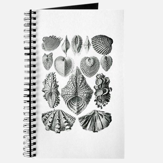 Shell Fossils Journal