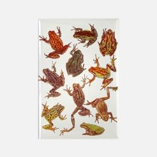 Tree Frogs Rectangle Magnet